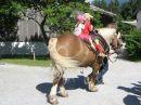 Richtig lebendig wird es im Museumsdorf, wenn eine Veranstaltung läuft, z.B. eine mit Pferden.