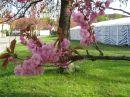 In diesem Maibaumzelt ...